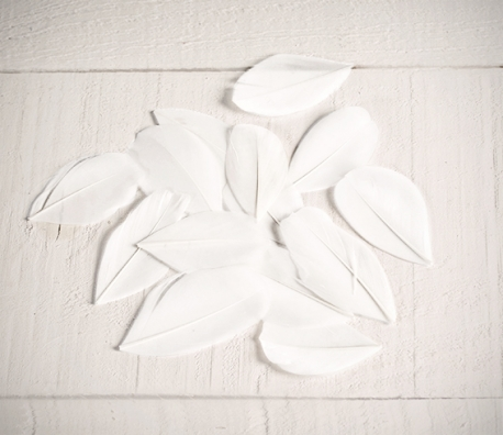 White feathers for handicrafts